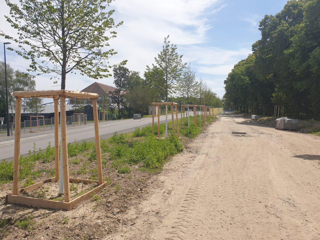 Les arbres plantés récemment le long de la Rue de Nantes, actuellement en travaux. © SPL Deux-Rives