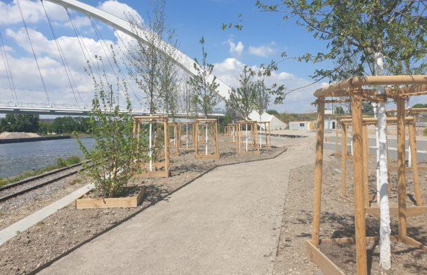 La Promenade des Quais du quartier Starlette. Les arbres ont été plantés et la promenade se devine avant l'apparition des premiers bâtiments ! © SPL Deux-Rives